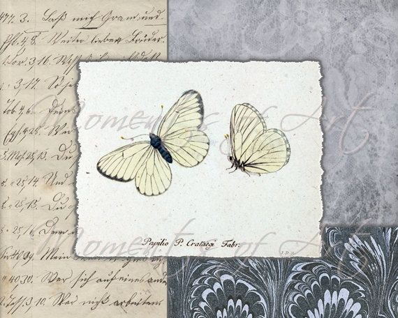 Butterfly Art Print Blue Lace Butterflies 8x10 by MomentsOfArt, $15.00
