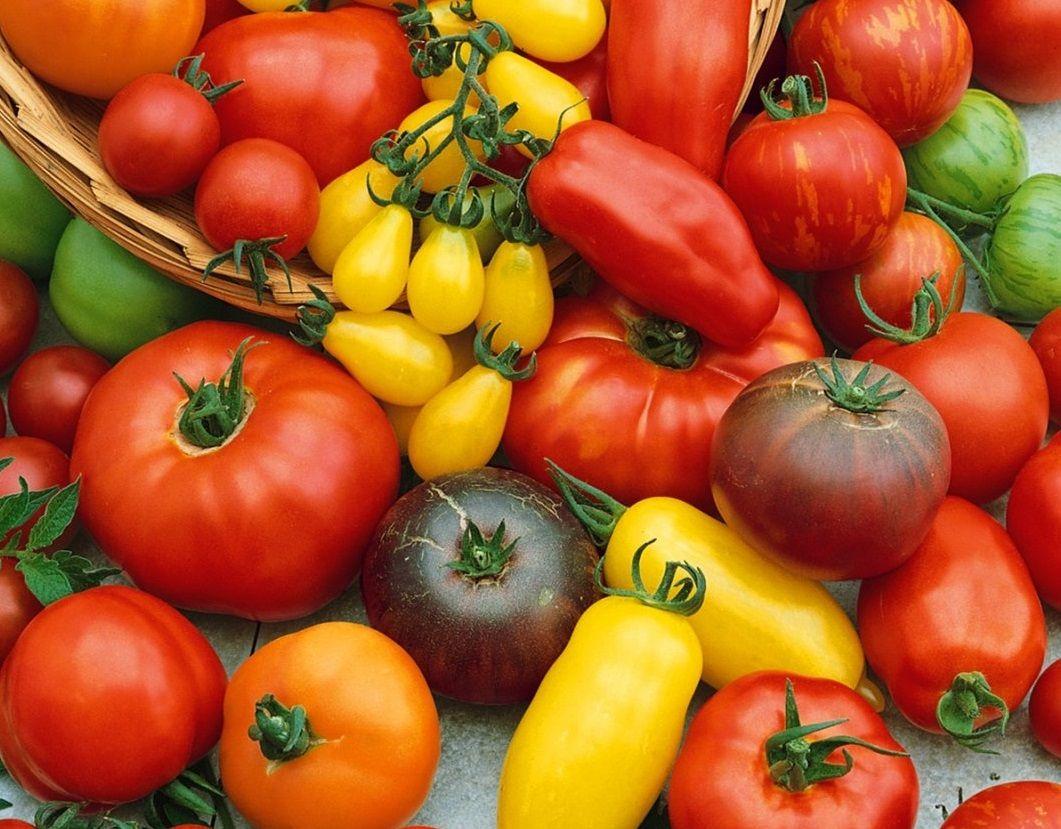 какие ранние сорта помидоров для теплицы