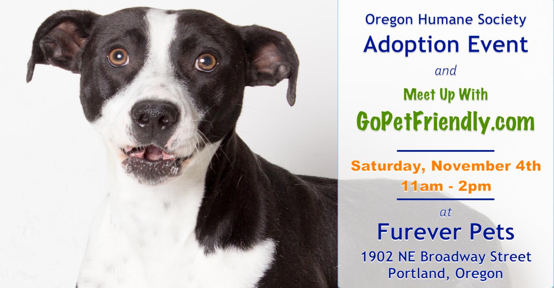 Oregon S Top Pet Friendly Attraction Portland S Parks Road Trip With Dog Pet Friendly Dog Friends