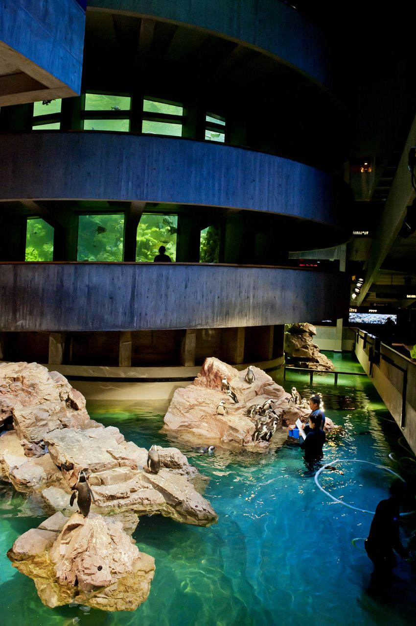 The Giant Ocean Tank towers above the African penguin