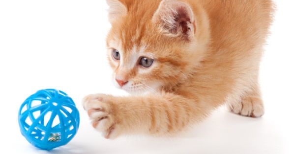 What Shots Do Kittens Need Pet Care Pets Kitten Care
