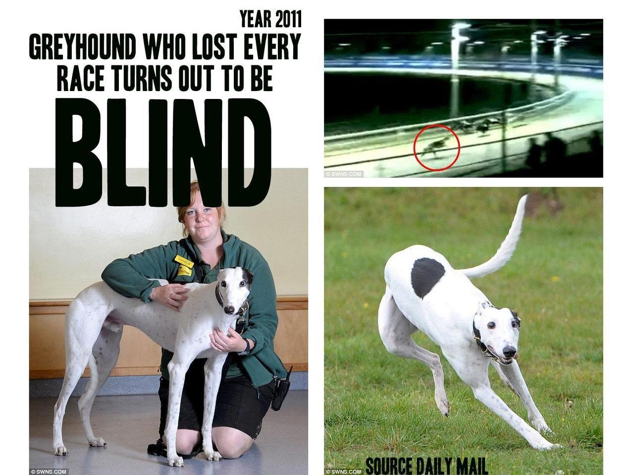 Greyhound, Greyhounds racing