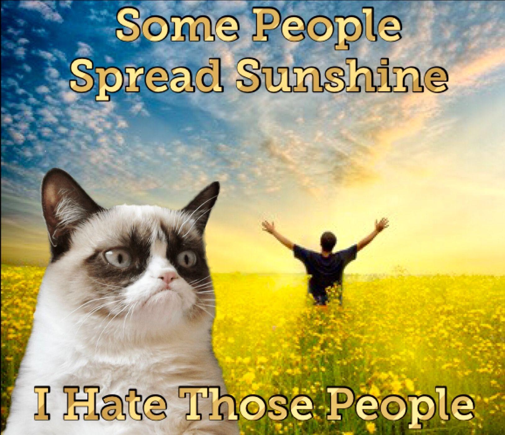 Bless Your Heart Meme Cat