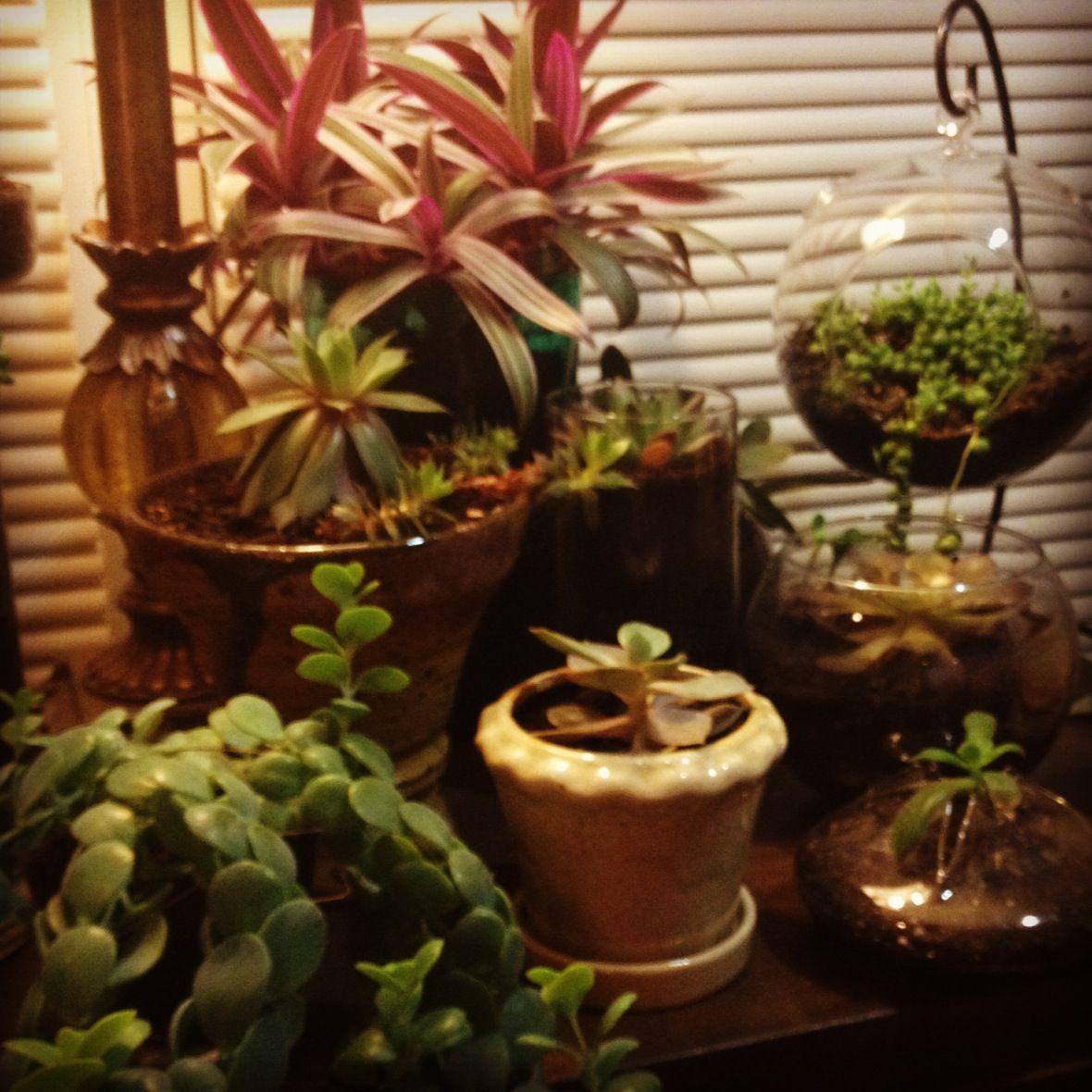 Indoor Succulent Garden JRR | Succulents! | Pinterest | Indoor ...