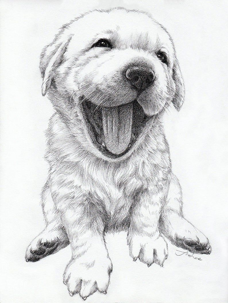 Custom Portrait Pet Portrait Drawingdog Cat Etc Etsy In 2021 Puppy Drawing Animal Drawings Pet Portraits [ 1055 x 794 Pixel ]