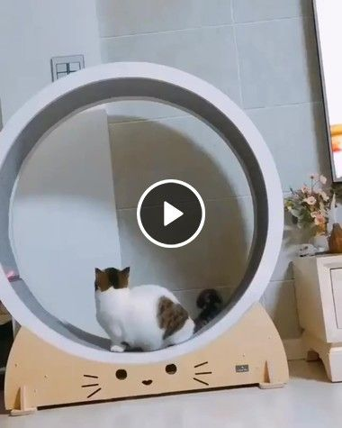 Video Found a new entertainment for the cat