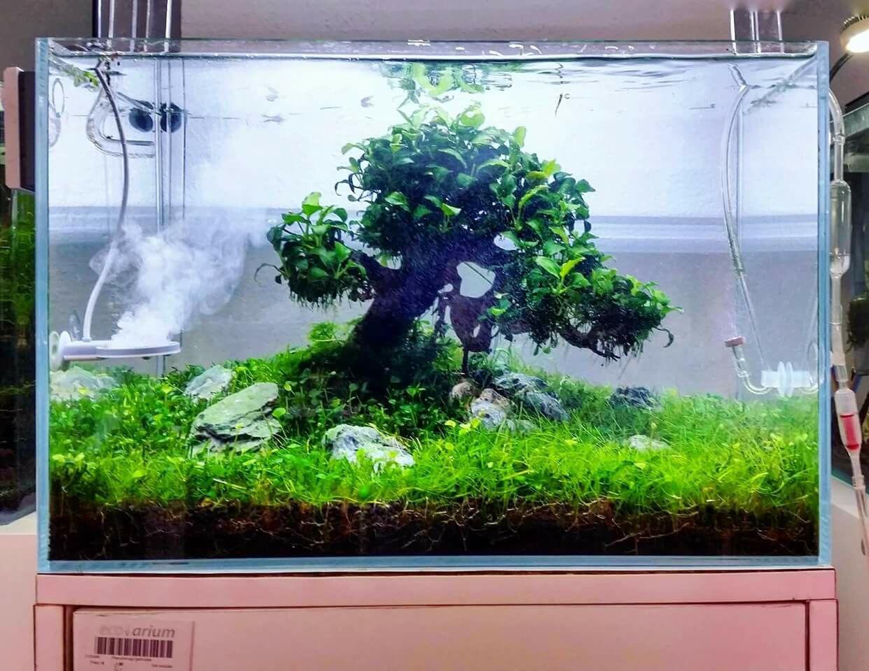small treescape with handmade bonsai tree and anubias mini mini by