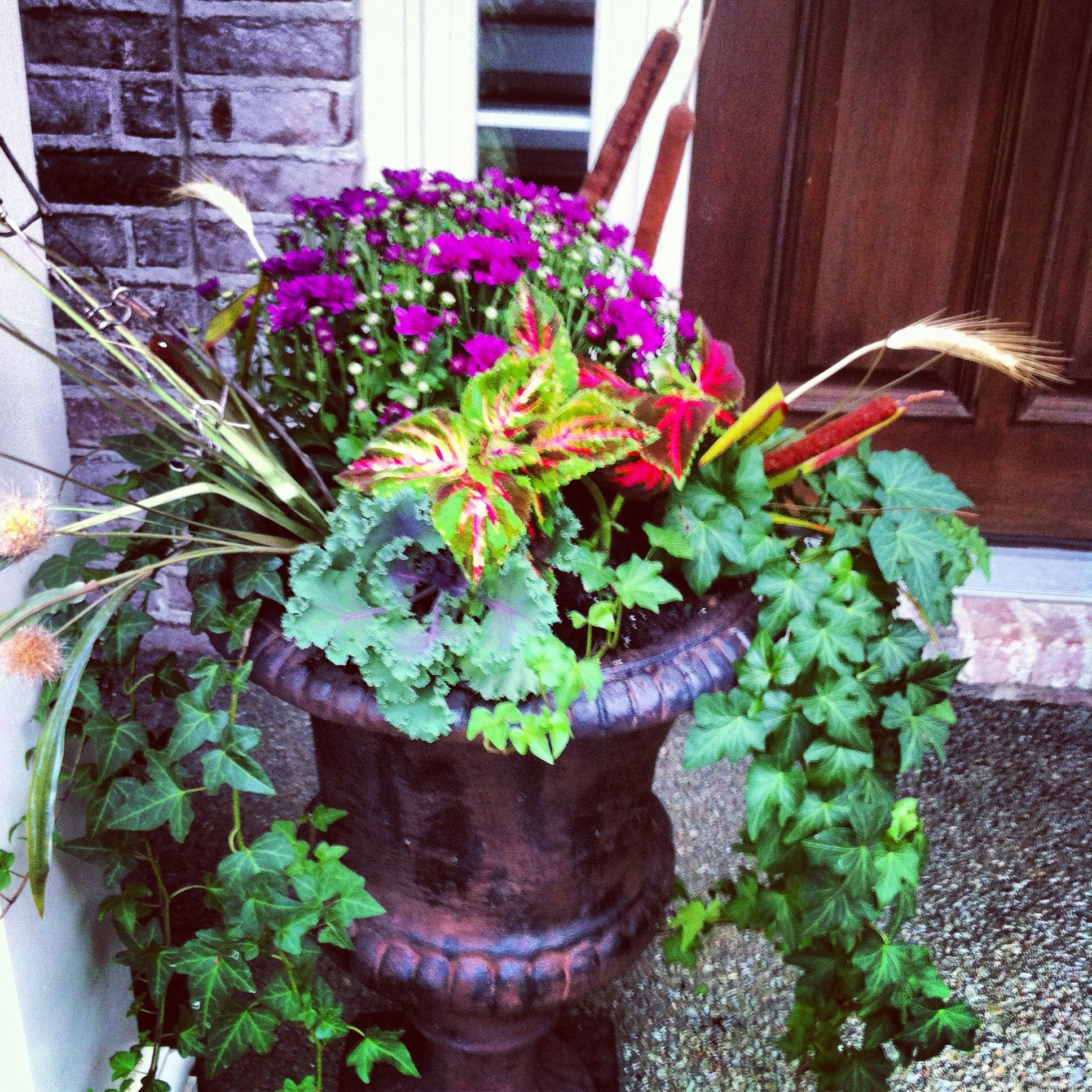 Fall planters using grasses coleuspink mumsornamental cabbage fall planters using grasses coleuspink mumsornamental cabbage grape vine izmirmasajfo Gallery