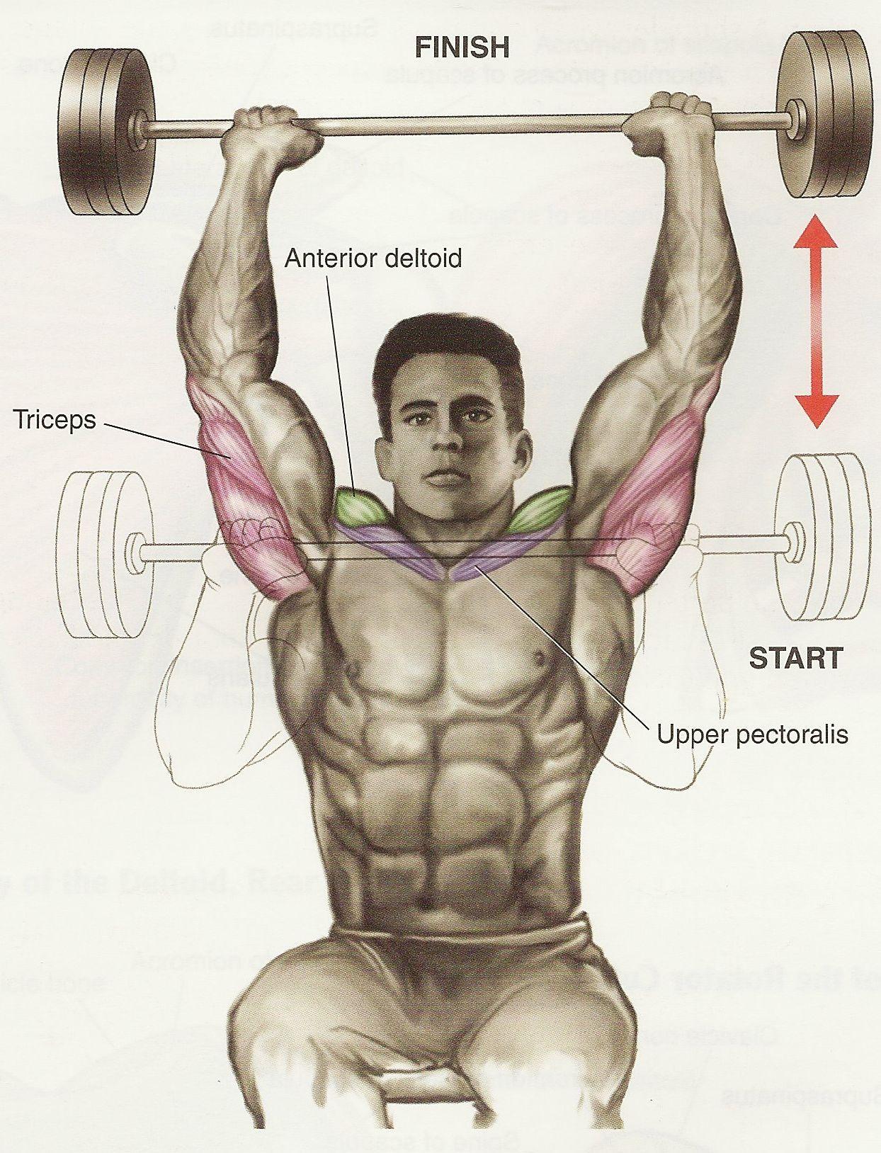 Ejercicios de hombros – Shoulder press con pesas de barra ...