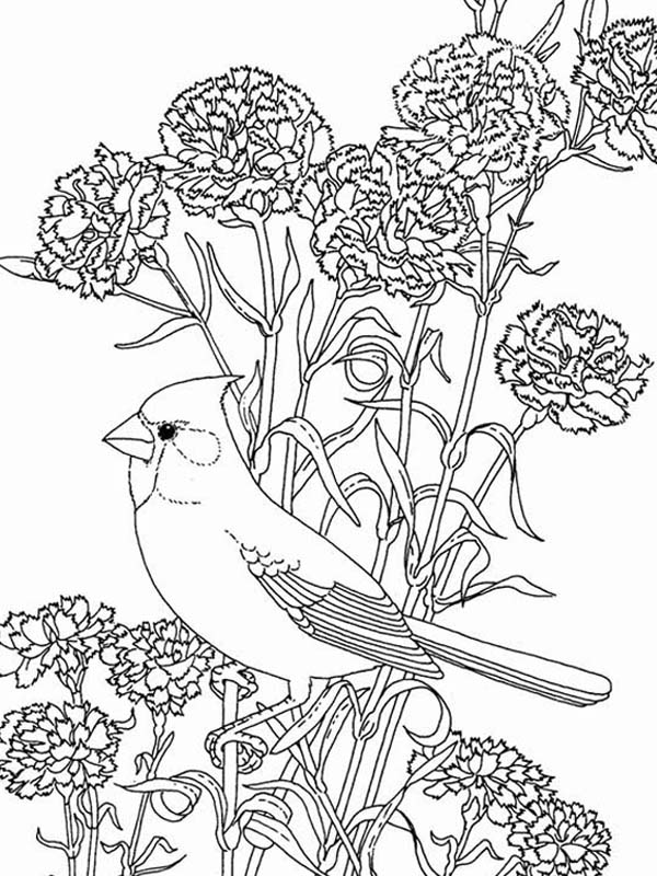 Pin By Cindylejeune On Birds Coloring Pages Bird Coloring Pages Coloring Pages Flower Coloring Pages