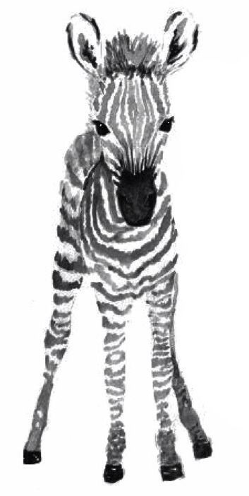 Baby Ilustration Cute Baby Zebra Tattoo Design Zebra Art Zebra