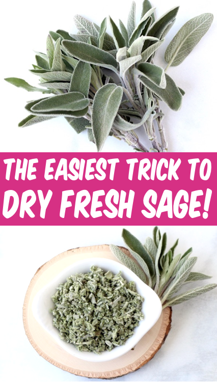 How To Dry Sage Leaves Fast Easy Diy Herb Drying Trick In 2020 Drying Fresh Herbs How To Dry Sage Drying Herbs