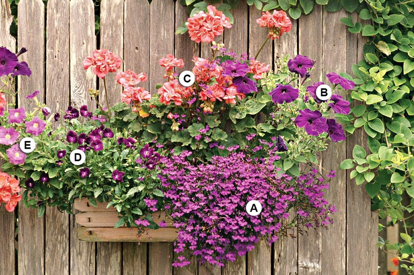 Balkonpflanzen Fur Bienen Zu Einem Schonen Arrangement
