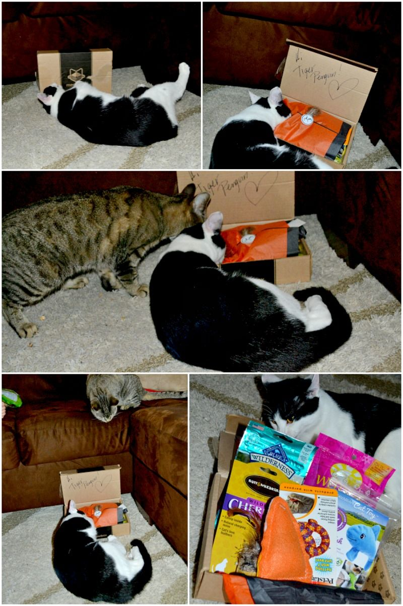 Meowbox A Cat Subscription Box Full of Unique Toys