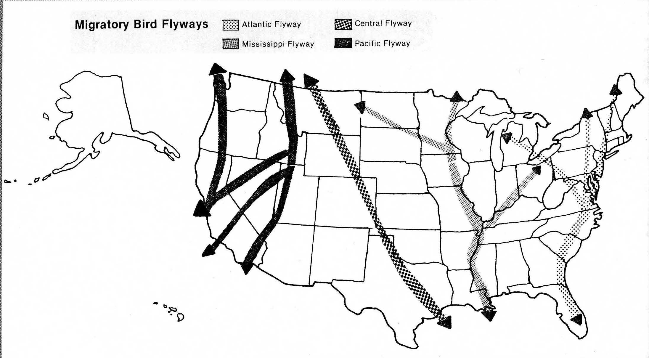 N American Bird Migration Map
