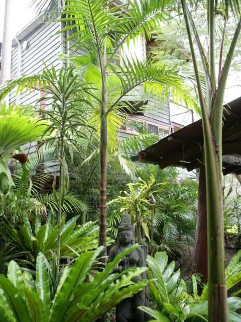 Tropical Plants Tropical Landscaping Tropical Garden Design Tropical Garden