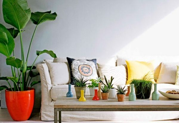Zimmerpflanzen Schattig diese zimmerpflanzen sind schattig und pflegeleicht living rooms