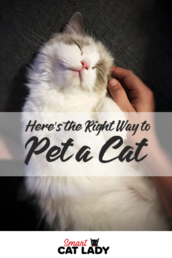 Here S The Right Way To Pet A Cat Cats Cat Facts Pets