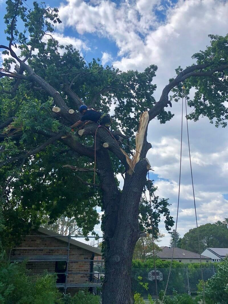 Tree Removal Sydney in 2020 Tree removal, Tree removal