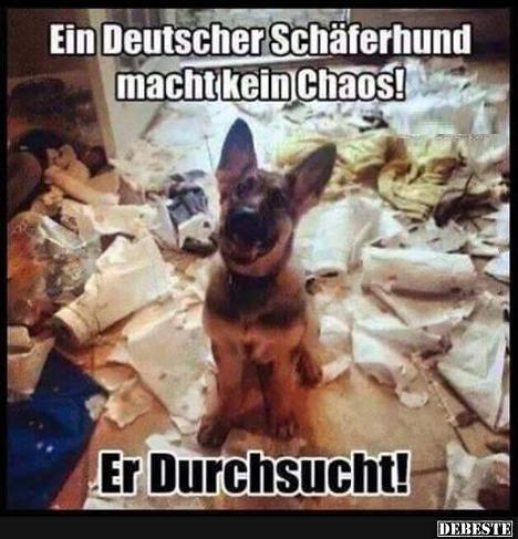 ein deutscher sch ferhund macht kein chaos lustige bilder spr che witze und. Black Bedroom Furniture Sets. Home Design Ideas