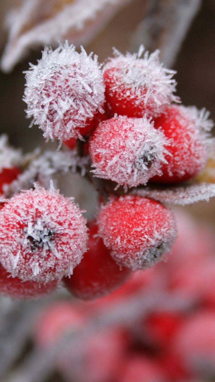 Download Wallpaper 720x1280 Berries, Frost, Hoarfrost