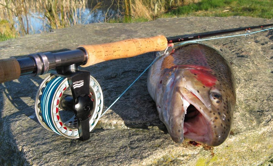 17 best images about trout fishing on pinterest | trout fishing, Fly Fishing Bait