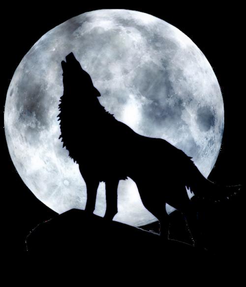 Tubes Loups Modele De Tatouage Loup Dessin De Loup Tatouage Loup