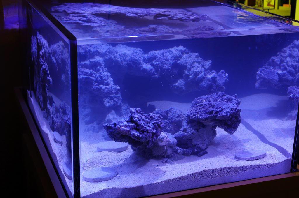 Aquascaping Inspiration | Aquarium, Fish