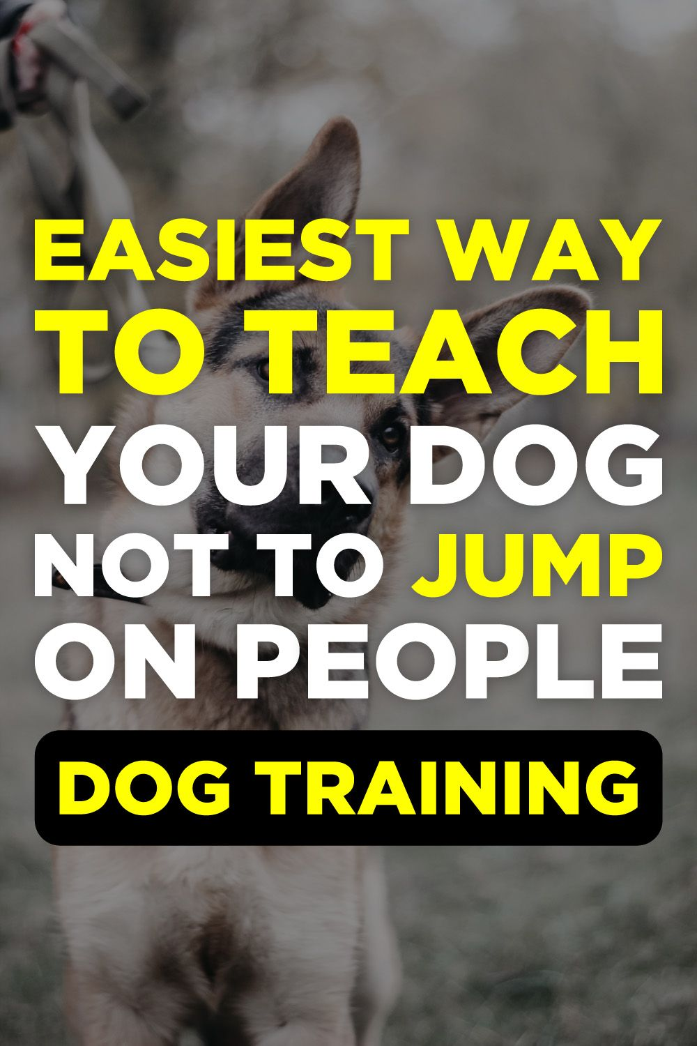 Brain Training For Dogs Review Clicker Training Puppy Emotional