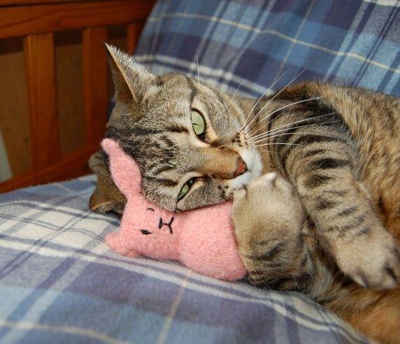 Honey Bunny Cat Toy  Cataire bio tricot laine par CattitudeCatToy, $15.00