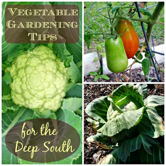 Greneaux Gardens Ve able Gardening Tips for the Deep South