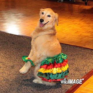Miss Brandy The Salsa Dancing Dog Like If You Love Dogs And Or