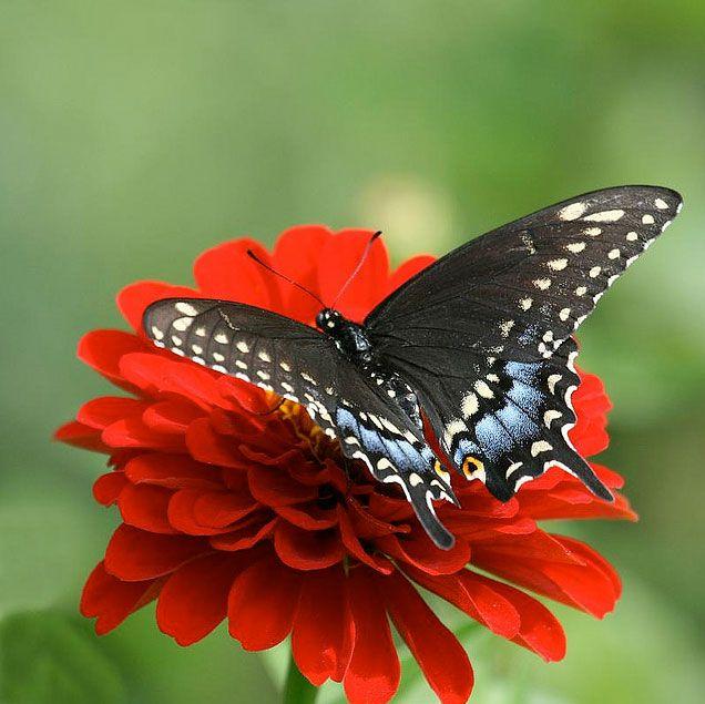 أجمل صور الفراشات في العالم صور لم تشاهدها من قبل Butterfly Photos Butterfly Pictures Beautiful Butterflies