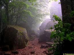 Poster il bosco incantato u pixers viviamo per il cambiamento