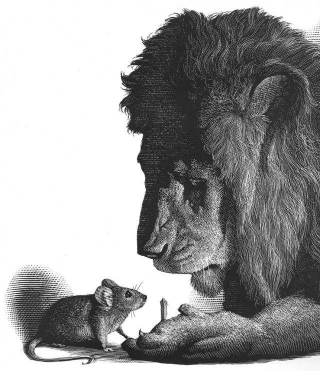 Animal Kingdom Illustrations14