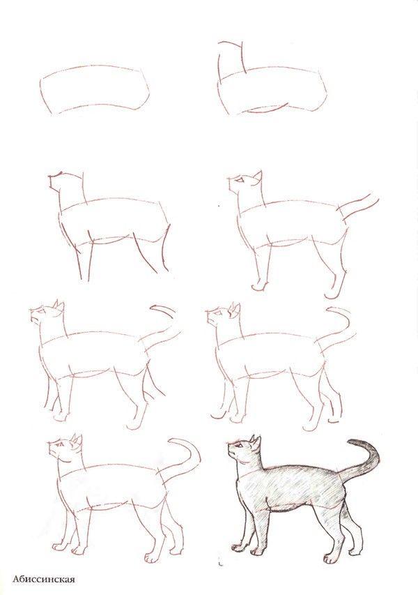 Aprenda A Desenhar 3 Corpo Humano Perspectiva Animais