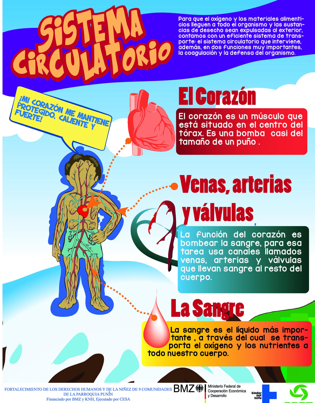Sistema circulatorio   EXPERIMENTOS   Pinterest   Sistema ...