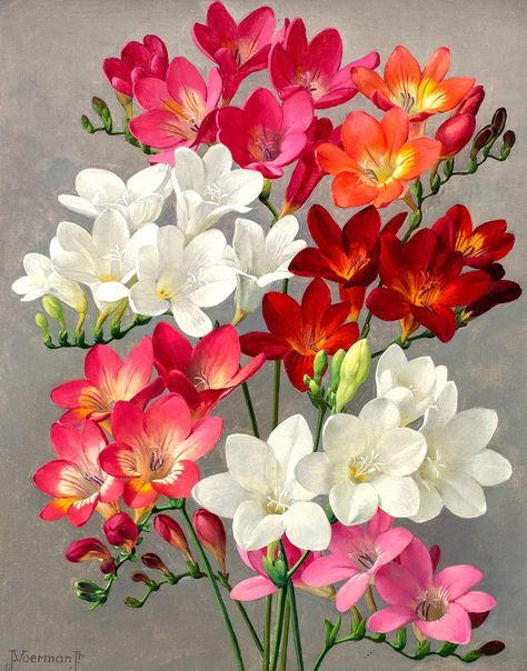 Jan Voerman Jr 1890 1976 Freesias Oil On Canvas 29 X 23 Cm Beautiful Flowers Flower Painting Blossoms Art