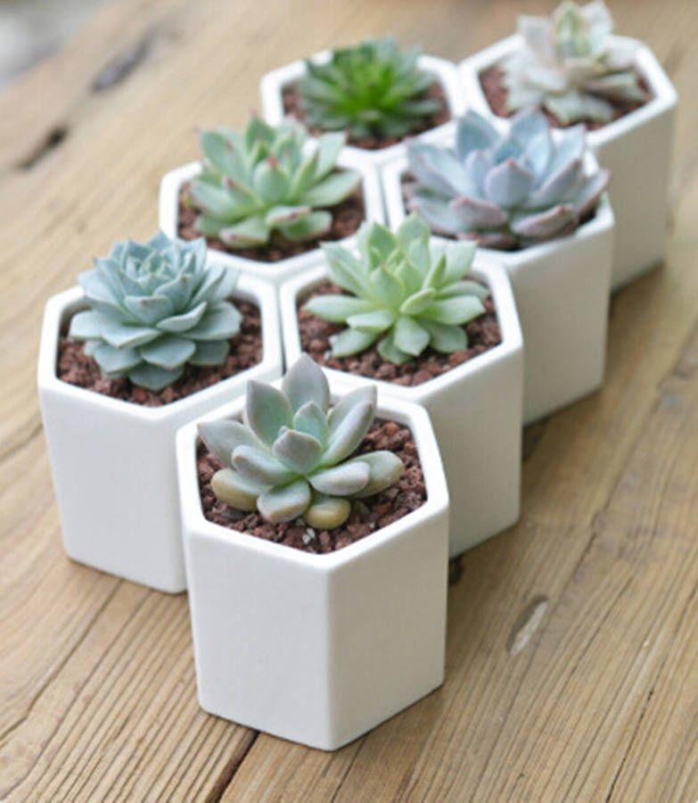 Hexagon Mini Planter Choice Of Succulent Or Cacti #succulents