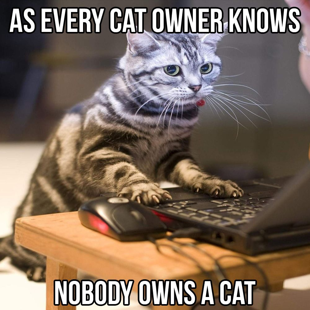 Catsmemes Catsgifmemes Funny Animal Pictures Cat Memes Cats Funnycatsjust Like Cat Funniest Animals Cat Fun Cat Funn Cats Cat And Dog Videos Dog Cat