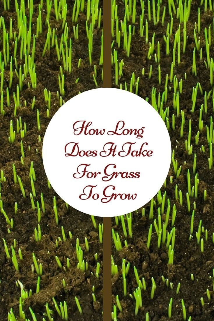 How long does it take for grass to grow modern design in