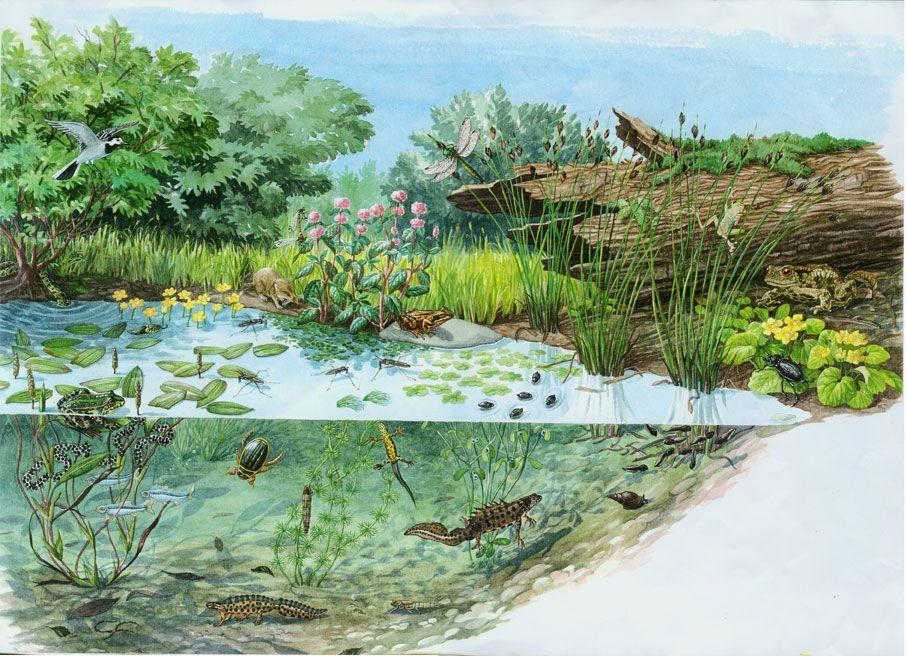 I colori di Conci- Conci's colours: Section of a pond-Abruzzo National Park