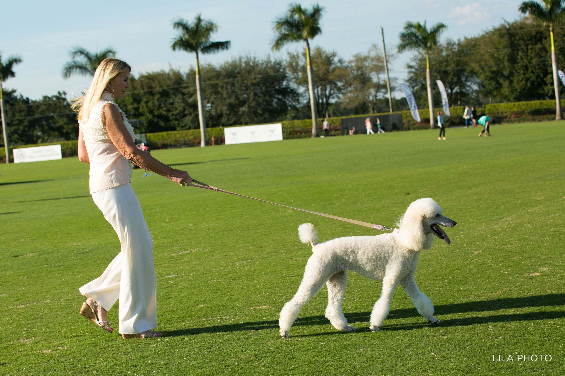 Poodle leads the way