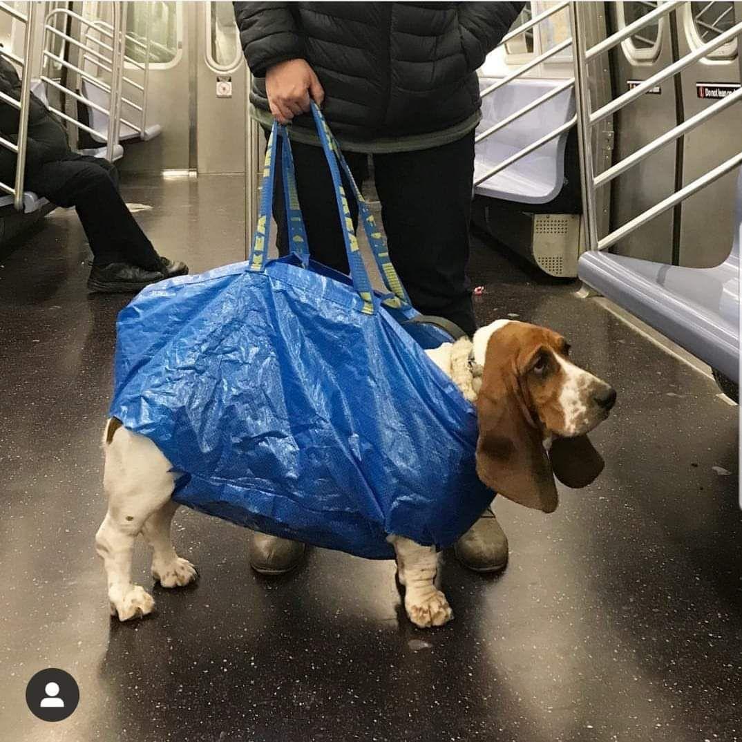 Pin By Wlo Work And Life On Bassetmania York Dog Dog Rates Dog Fails