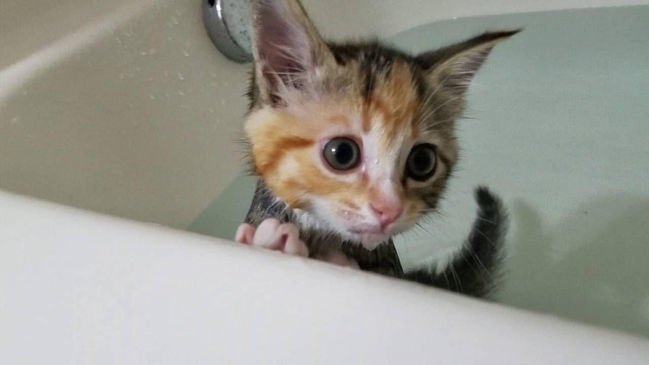Kittens First Bath Kittens Cutest Cute Kitten Gif Kittens