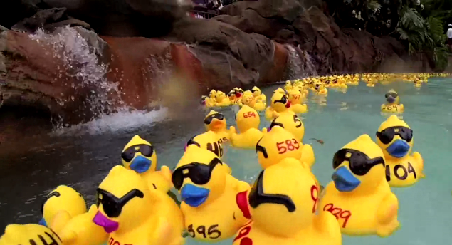Duckies Waddle at Aulani to Support Efforts in Conserving Our Lands and Water