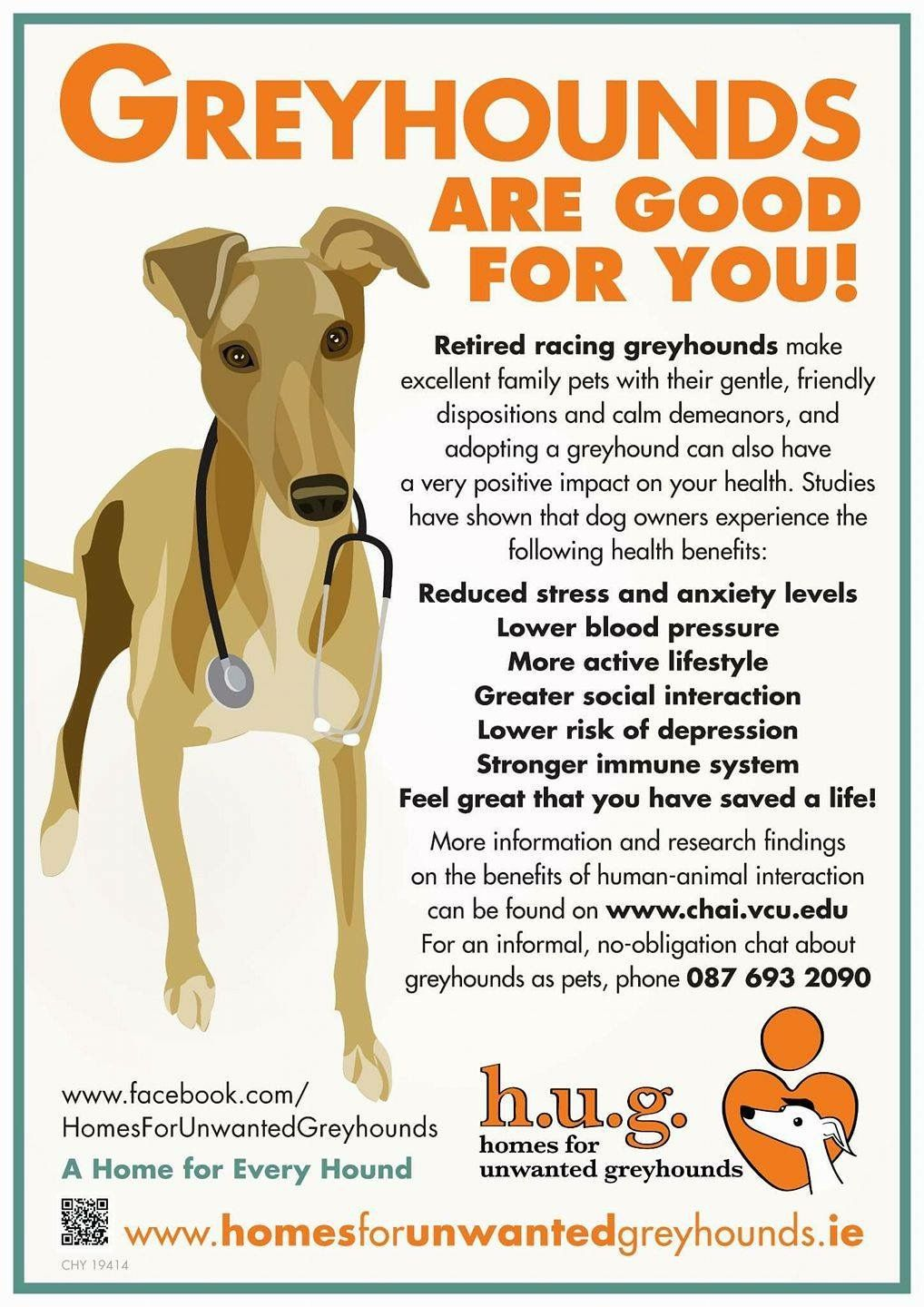 Sighthound physiology chart bring to vet to educate on what sighthound physiology chart bring to vet to educate on what makes greyhounds different avoid bad advice and costly bills apollo pinterest nvjuhfo Image collections