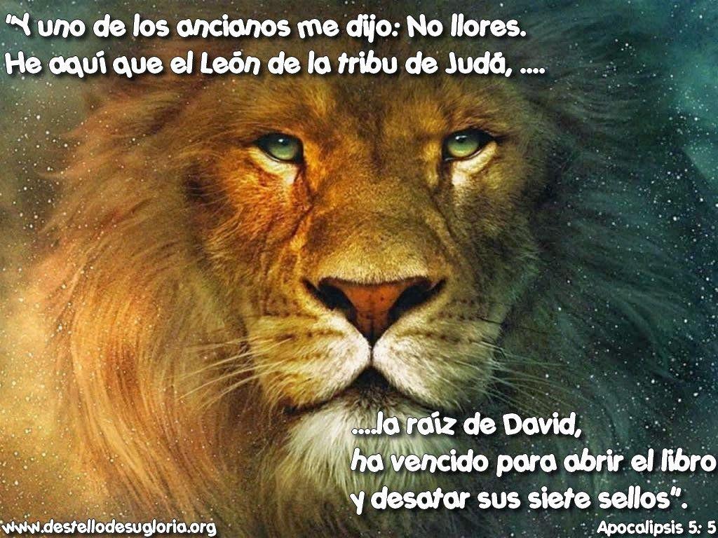 Resultado de imagen para el leon de juda