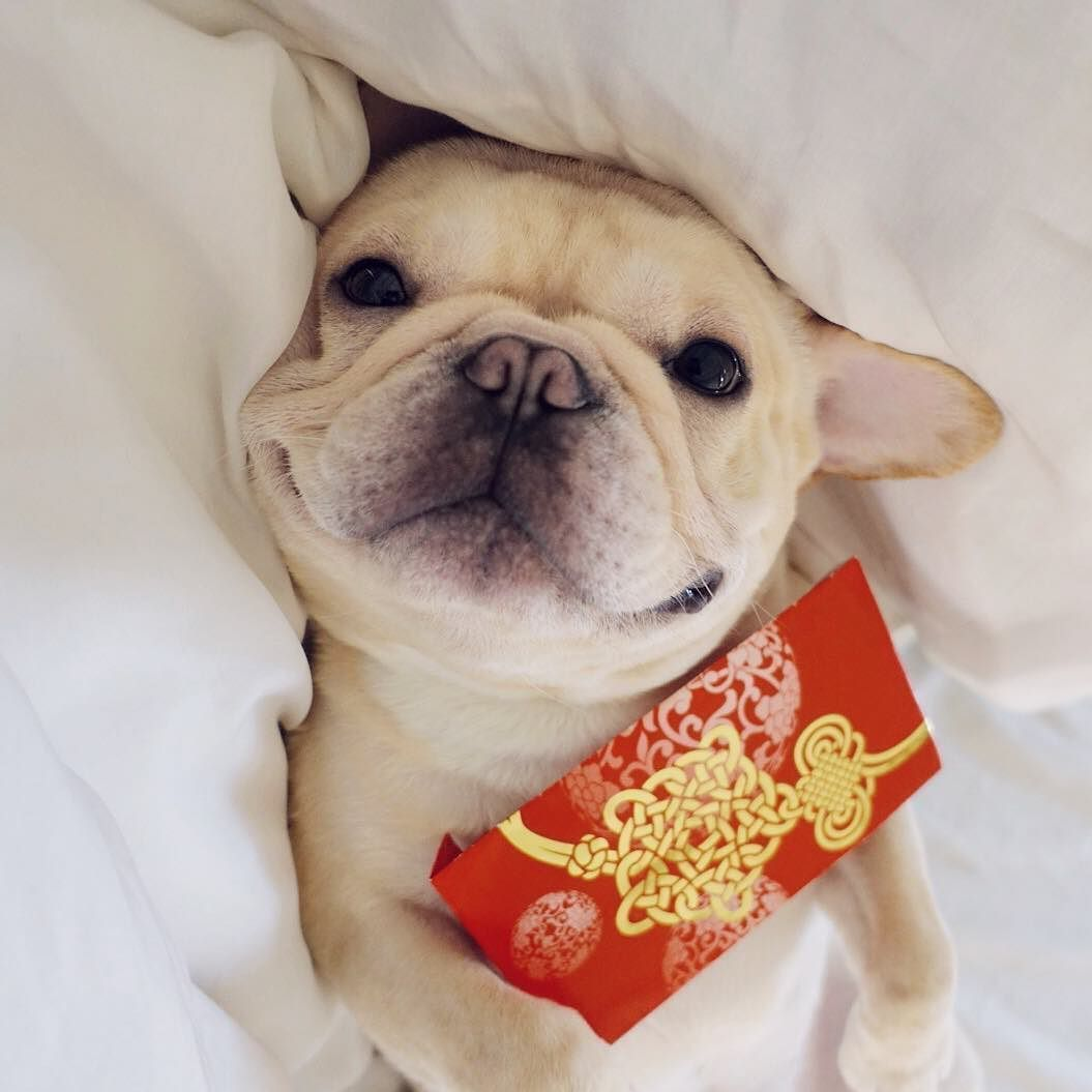 Happy Cny Betches Imrich By Frenchiebutt Http Ift Tt