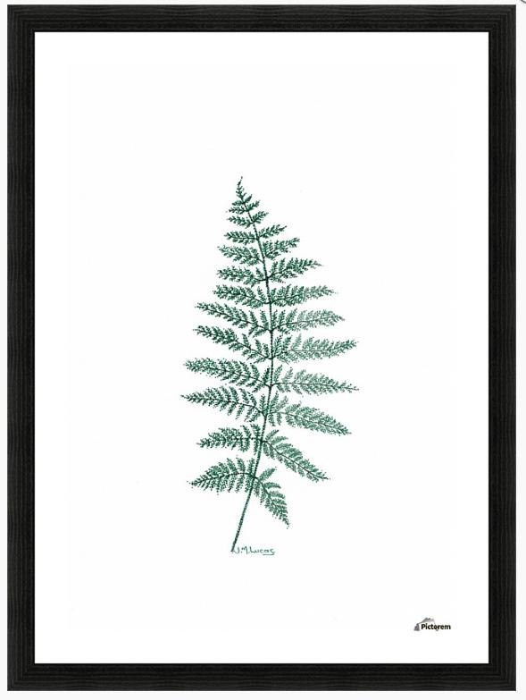 New Zealand Tree Fern is drawn using a green fine Liner Pen.  Why not follow my art on Instagram?  www.instagram.com/janelucasart  Thanks for looking.  Kind Regards  Jane :-)  www.redbubble.com/people/artbyjanelucas
